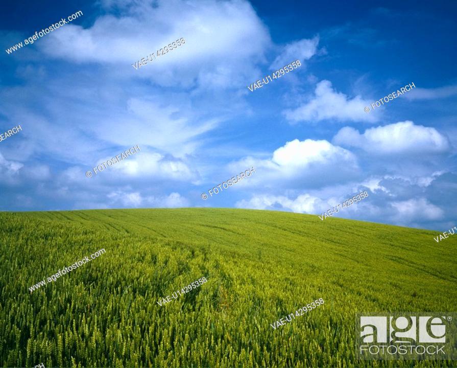 Stock Photo: Rural landscape.