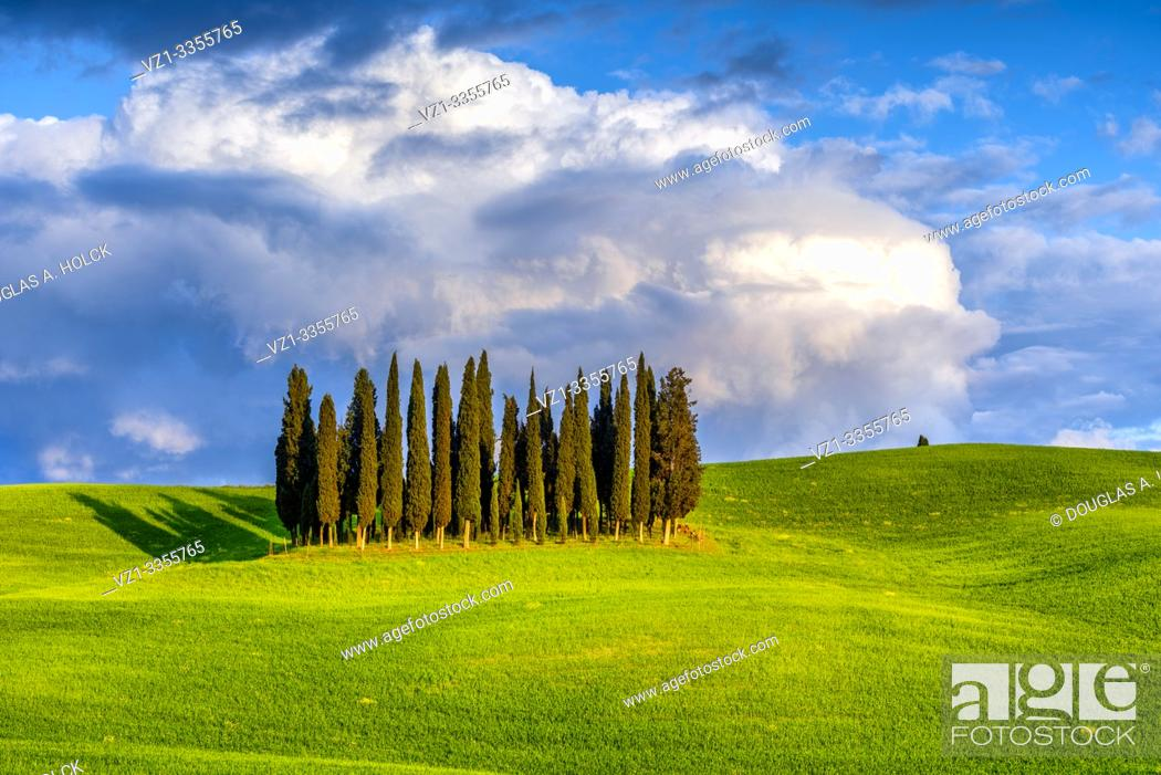 Imagen: Sunset on Cypress Grove Val d'Orcia Tuscany Italy World Location.