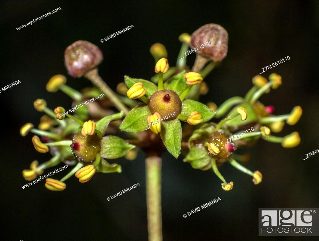 Stock Photo: Small flowers with stamens. Macro. Sierra de Guadarrama. Madrid province. Spain.