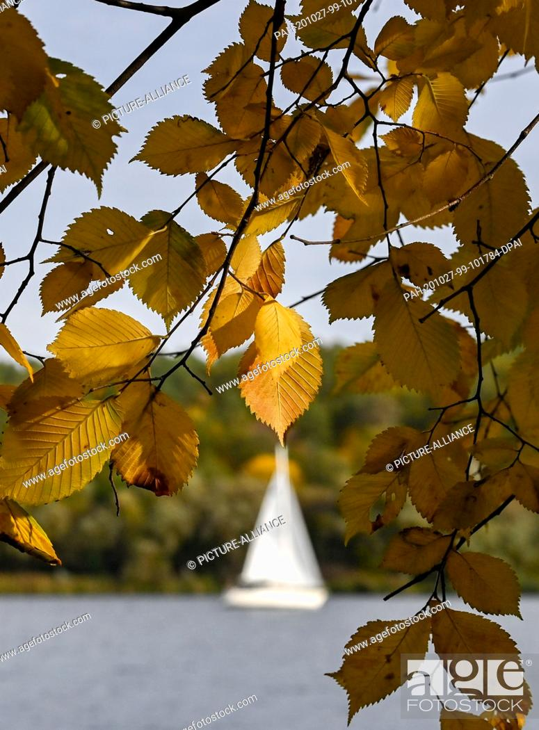 Stock Photo: 27 October 2020, Berlin: A sailing boat sails in sunny autumn weather past brightly coloured trees near Gatow on the Havel.