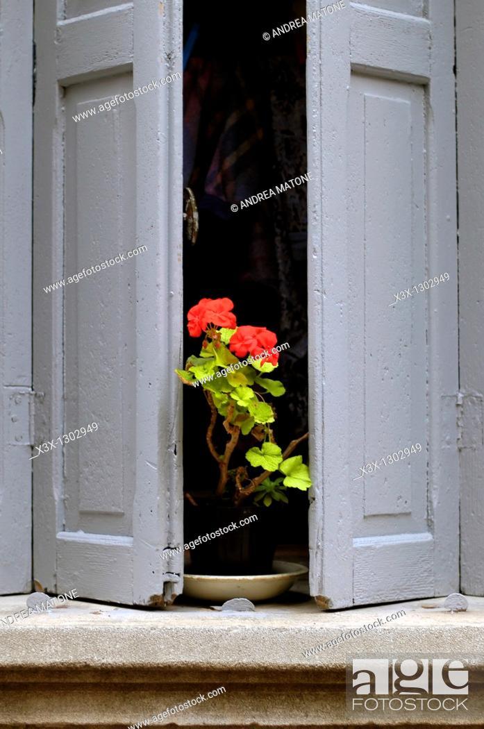 Stock Photo: Red geranium flowers on a window pane.