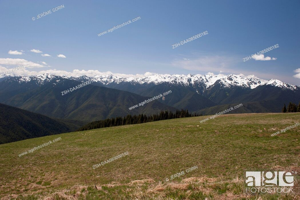 Stock Photo: Tranquil meadow backed by Olympic Mountains, Olympic National Park, Washington, USA.