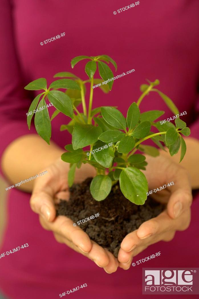 Stock Photo: Woman holding seedling.