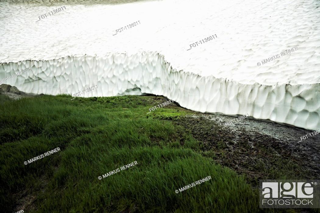 Stock Photo: Grass growing next to the Mutnovsky Glacier, Kamchatka, Petropavlovsk Kamchatsky, Russia.
