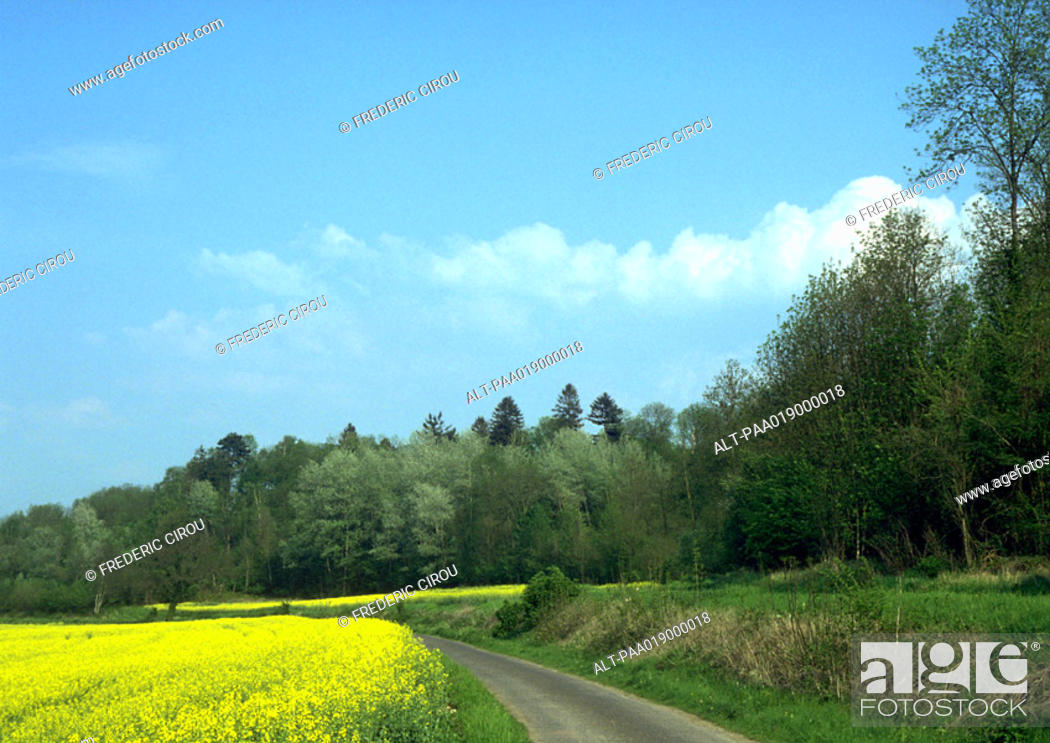 Stock Photo: Road through field with field of rapeseed and trees.