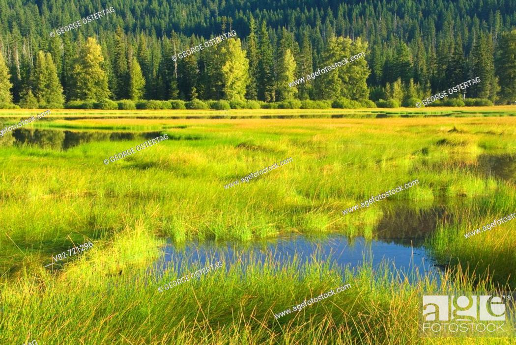 Stock Photo: Lost Lake, McKenzie Pass-Santiam Pass National Scenic Byway, Willamette National Forest, Oregon, USA.