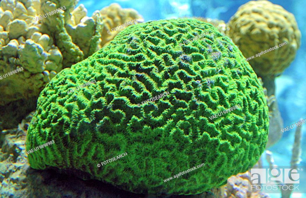 Stock Photo: coral, corals, David, ewing.