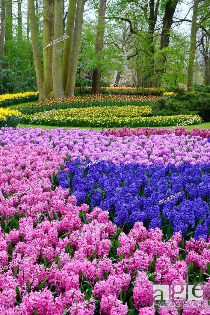 Stock Photo: Garden Design in Spring, Keukenhof, Netherlands, Europe.