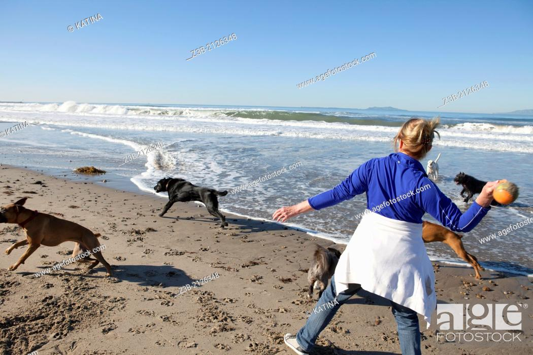 Stock Photo: Woman aged 50+ plays ball with dogs on beach in Oxnard, California.