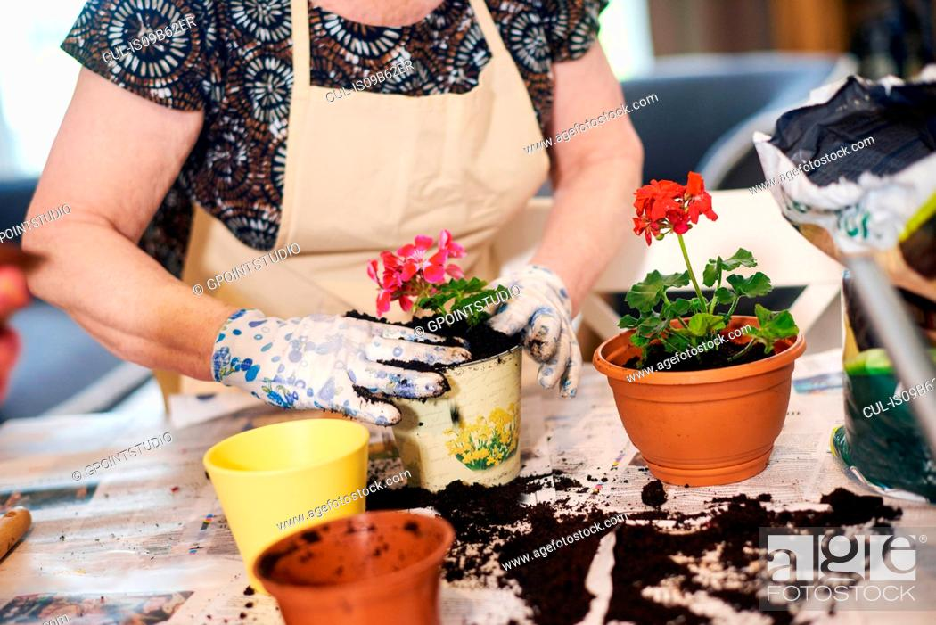 Stock Photo: Senior adult woman potting plants on table.
