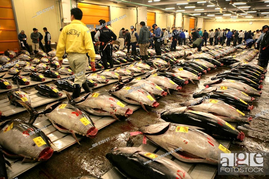 Photo de stock: World largest fish wohlesale market Tsukiji Auction of fresh and frozen tuna fish Tokyo Japan.