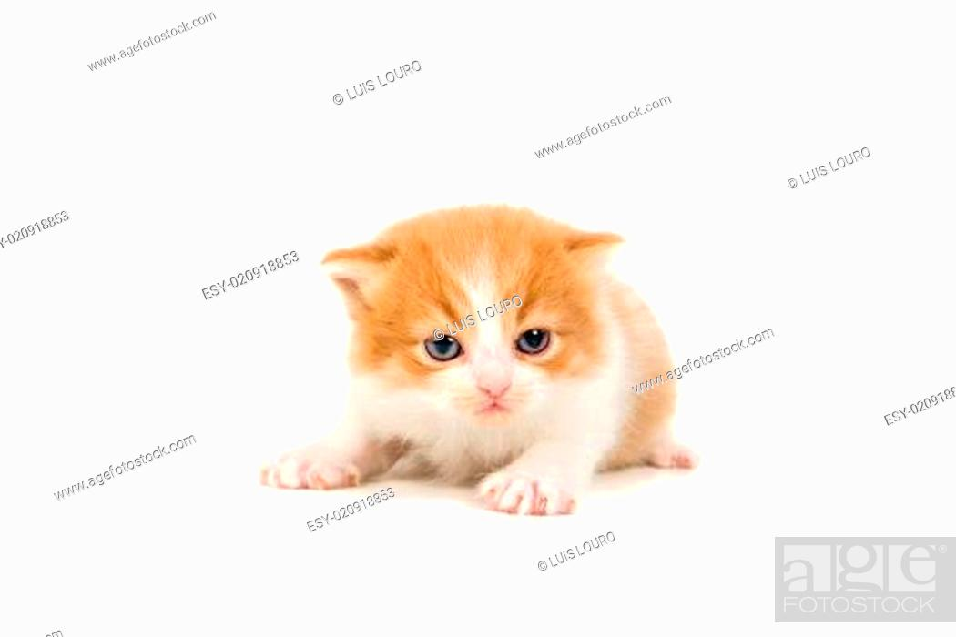 Stock Photo: Kitten.