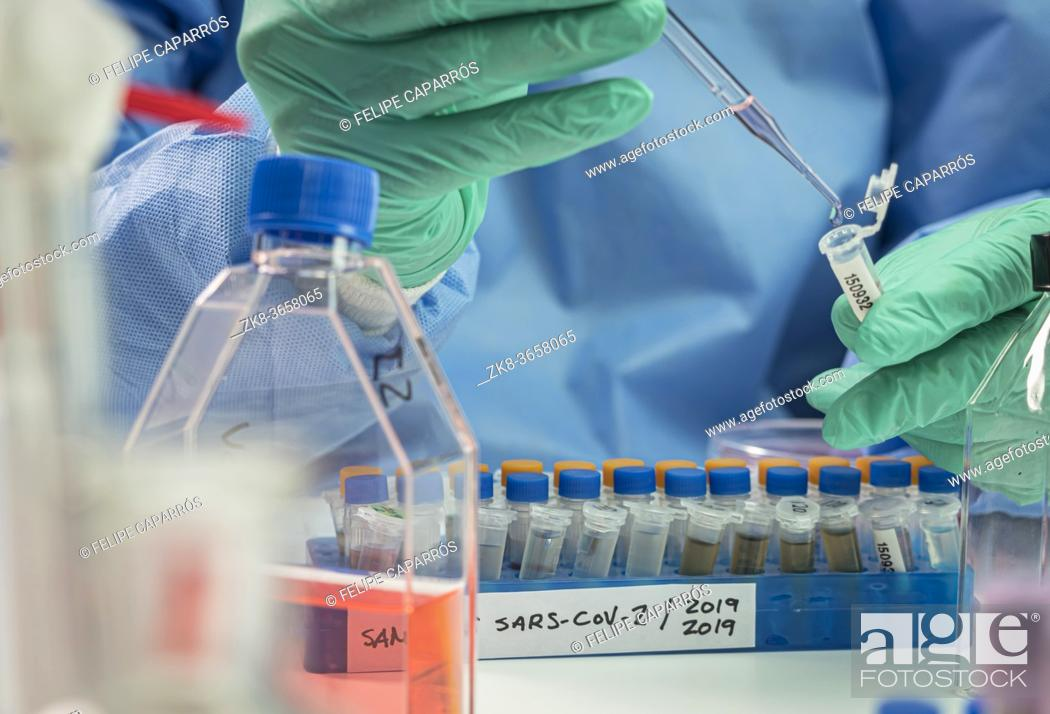 Imagen: Vials with samples of SARS-COV-1 prepared cold in a laboratory, epiedomological study on Sars-CoV-2 Covid-19, conceptual image.