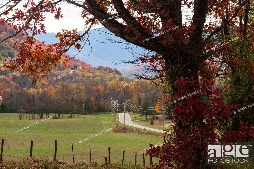 Stock Photo: Autumn Color in East Tennessee.