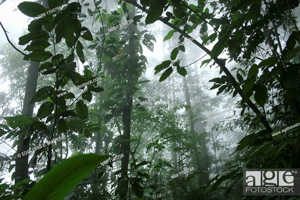 Stock Photo: Cloudy forest, Henri Pittier National Park, Venezuela.