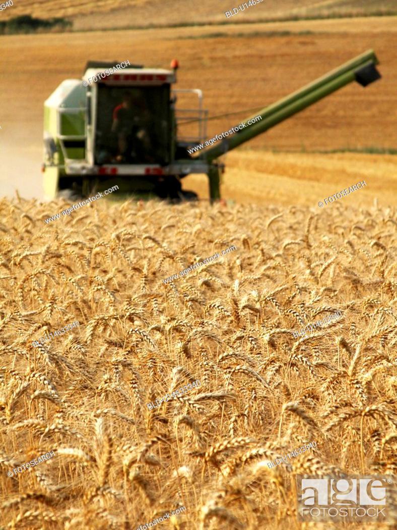 Stock Photo: Harvesting field of grain.