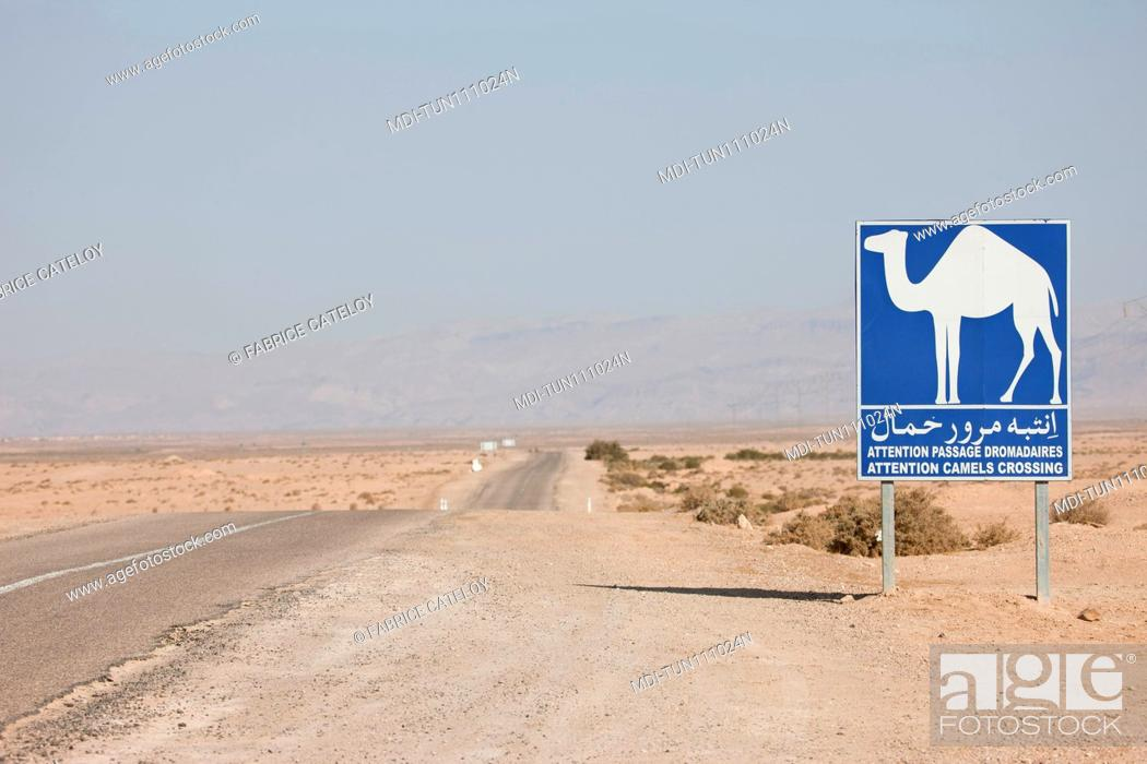 Stock Photo: Tunisia - Around Chebika - Camel crossing road sign on a road between Tozeur and Chebika.