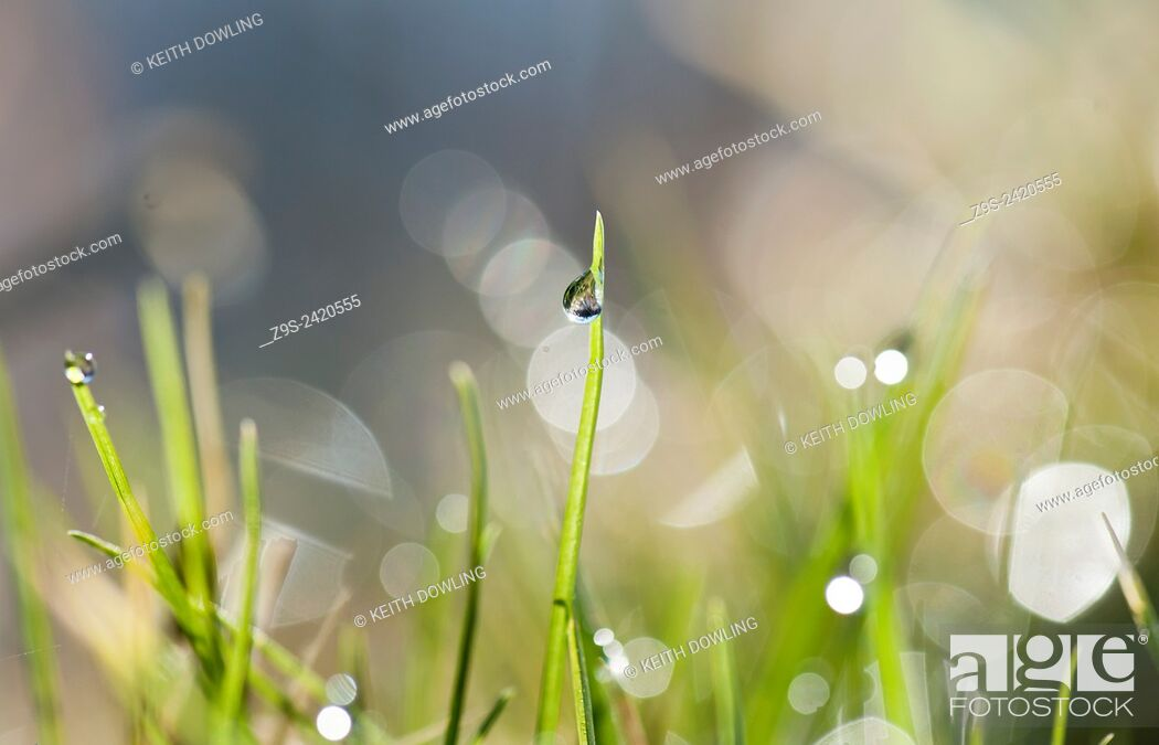 Stock Photo: Dew drop sparkles with detail in Early Morning light on a blade of grass.
