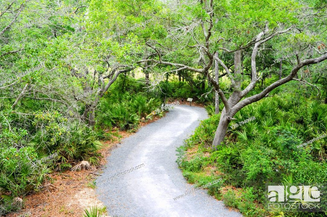 Stock Photo: Apalachicola Natural Estaurine Research Reserve Franklin County Florida.