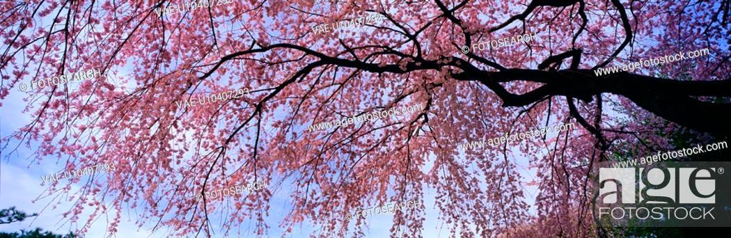 Stock Photo: sky, landscape, spring, season, scenery, tree, nature.