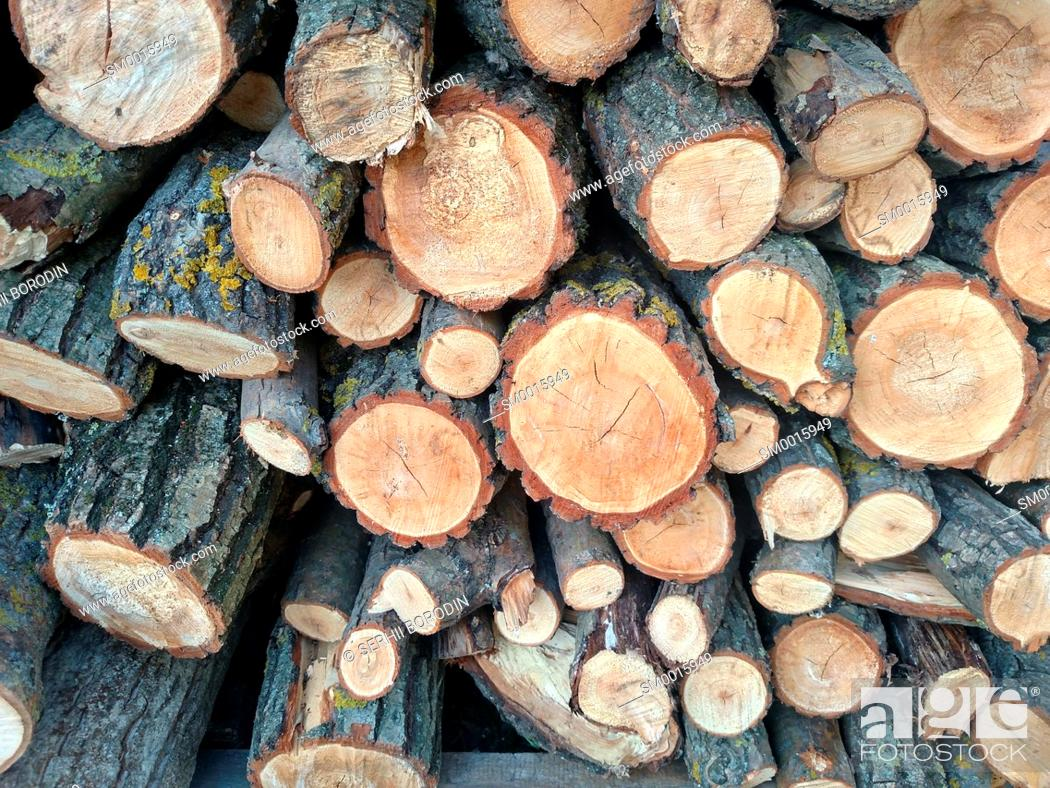 Stock Photo: Logs crosscuts on the timber cutting Piles of cut wood tree trunk textures nature.