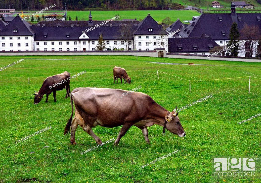 Imagen: Swiss cows in foreground, Engelberg Benedictine Monastery in the background, Engelberg, Obwalden canton, cantral Switzerland.