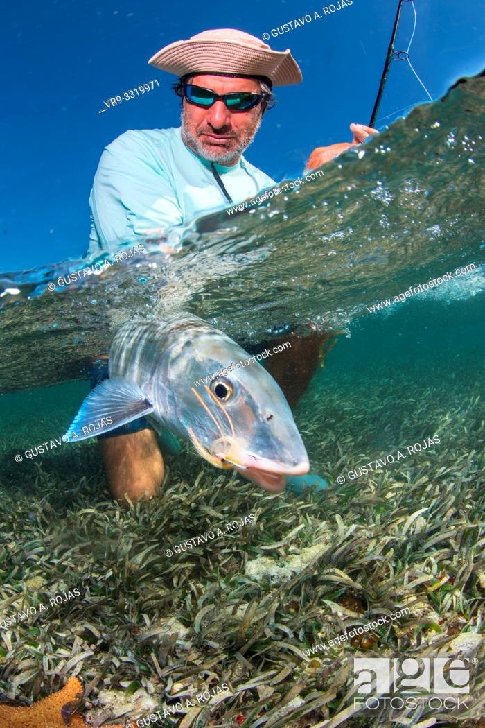 Stock Photo: saltwater fly fishing Over/under off man hold a BIG BONEFISH underwater los roques venezuela.