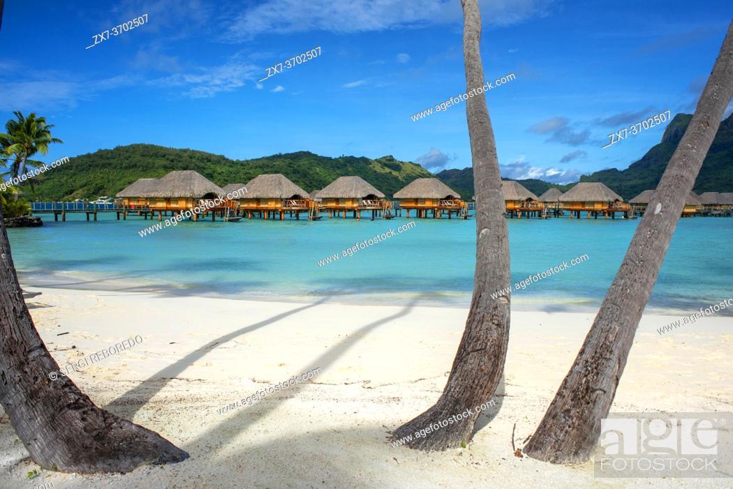 Stock Photo: Palms in the beach at Le Bora Bora by Pearl Resorts luxury resort in motu Tevairoa island, a little islet in the lagoon of Bora Bora, Society Islands.