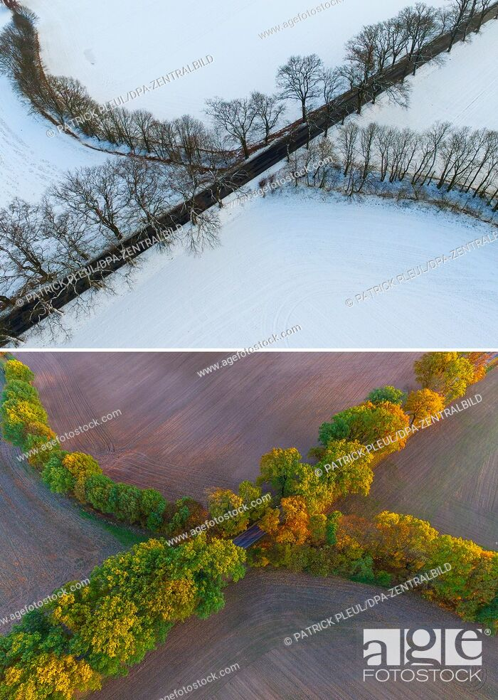 Stock Photo: COMBO - The 2-part composite picture shows the same lines of trees near Sieversdorf, Germany, in winter on 17 January 2017 (top) and in autumn on 30 October.