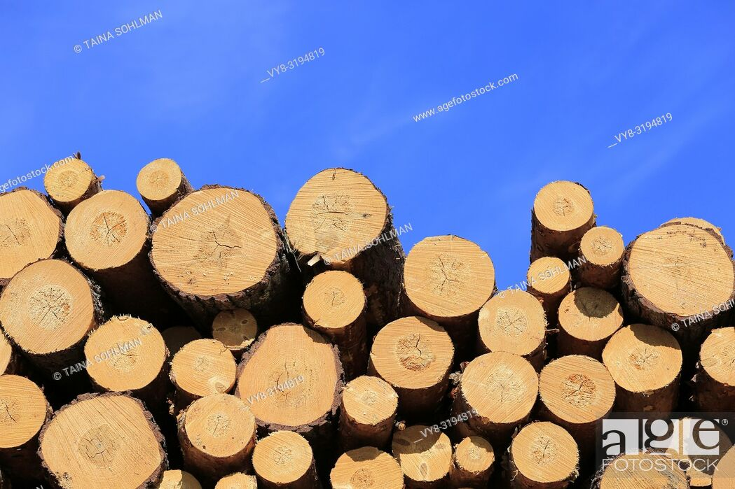 Stock Photo: Stacked pine logs against blue sky on a beautiful day of spring.