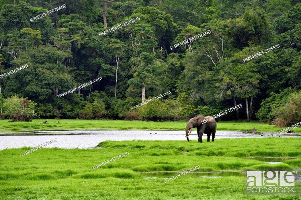 Gabon, Ogooue-Maritime Province, Loango National Park, Akaka