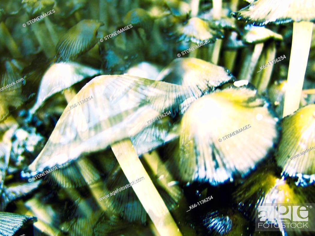 Stock Photo: Mushrooms in- autumn.