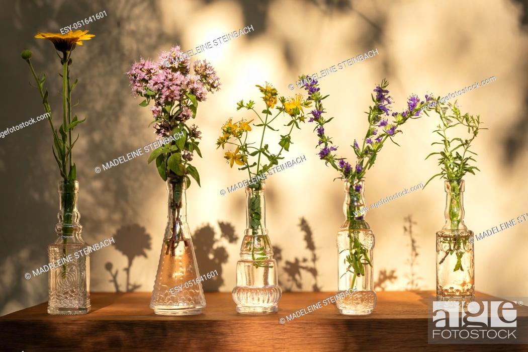 Stock Photo: Five glass bottles with calendula, oregano, St John's wort, hyssop and mountain savory.
