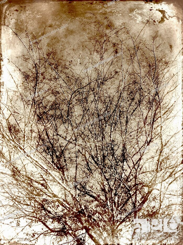 Stock Photo: The branches of a tree bare of leaves in the winter.