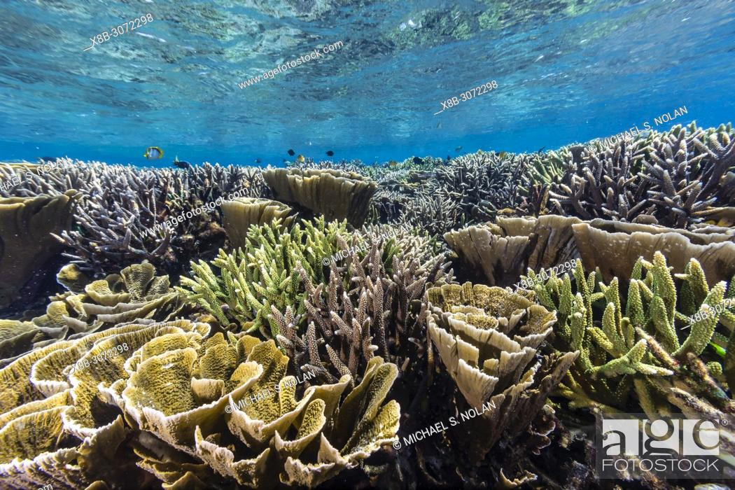Stock Photo: A profusion of hard and soft corals on Siaba Kecil Island, Komodo National Park, Flores Sea, Indonesia.