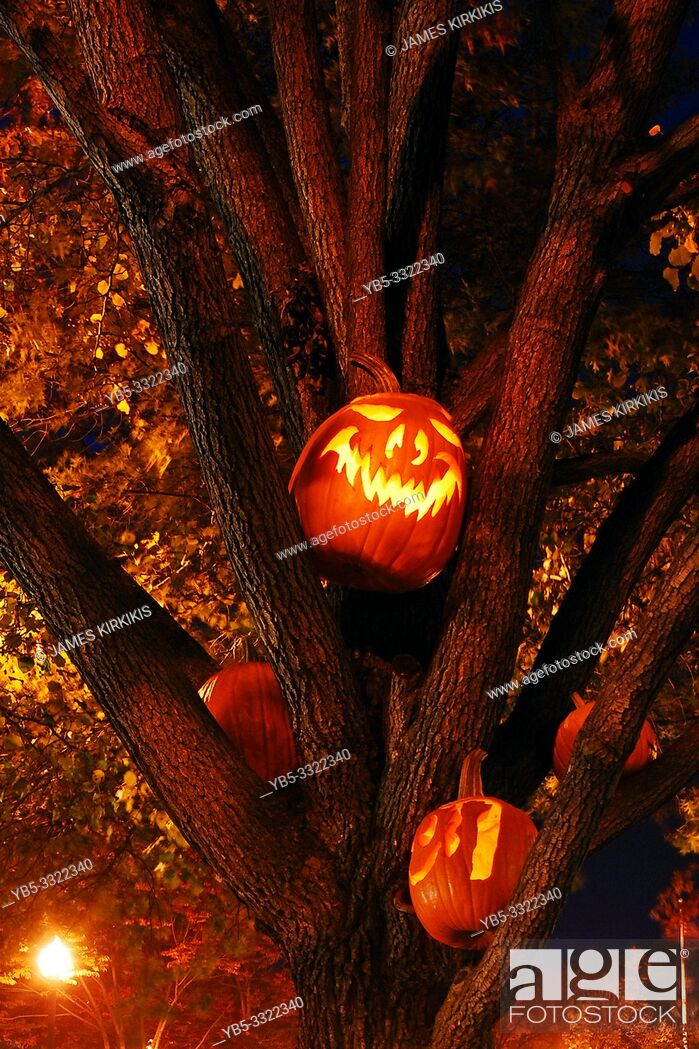 Stock Photo: Carved pumpkins with eerie faces are placed in a tree near Halloween.