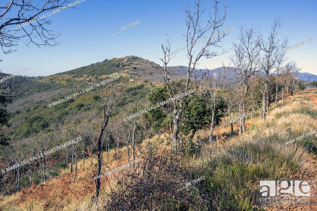Imagen: Holm oaks and bushes in Toledo's Hills. Spain. Europe.
