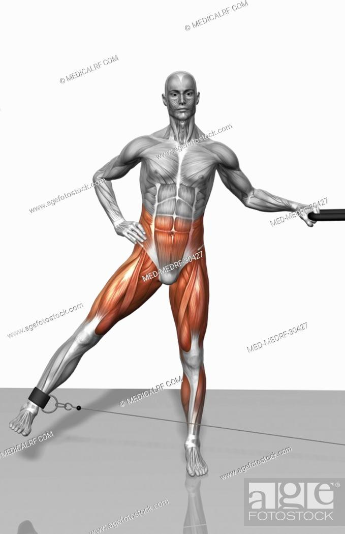 Stock Photo: Cable leg abduction.