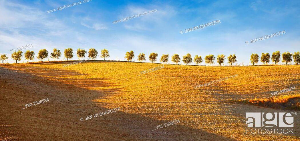 Stock Photo: Tuscany landscape, Val d'Orcia, Tuscany, Italy.