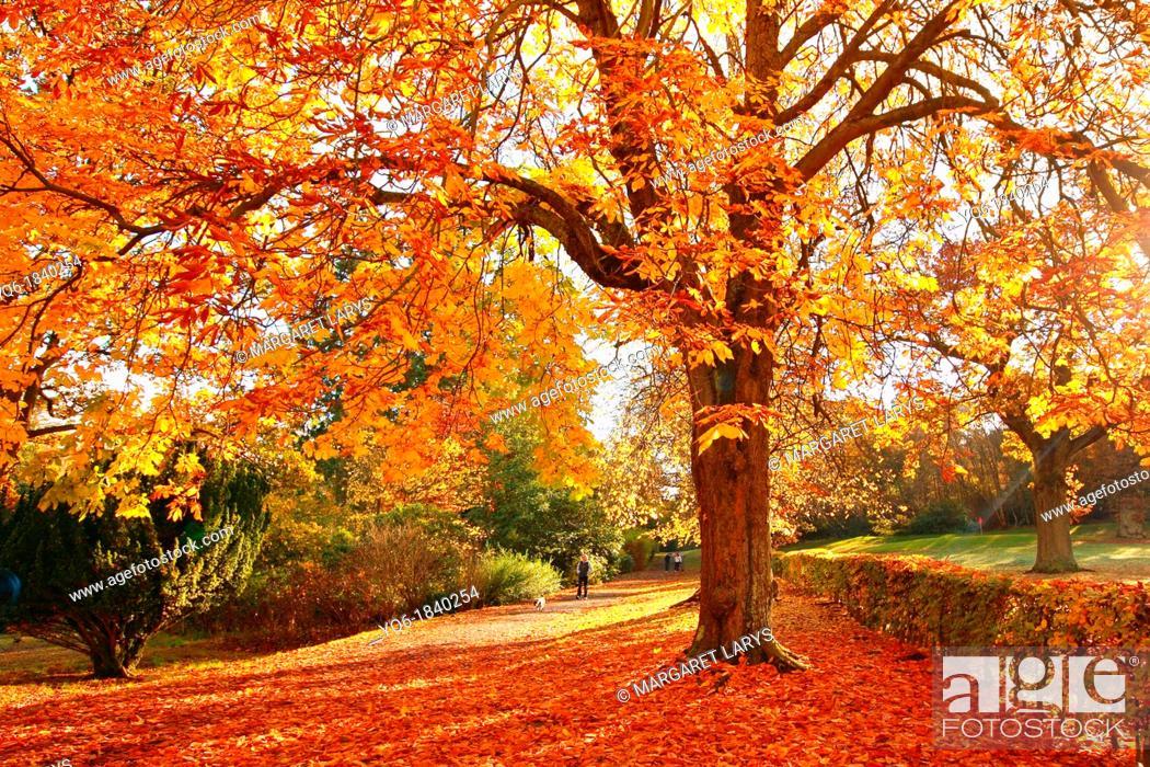 Stock Photo: Wonderful autumnal scene in the park of Falkirk, Scotland.