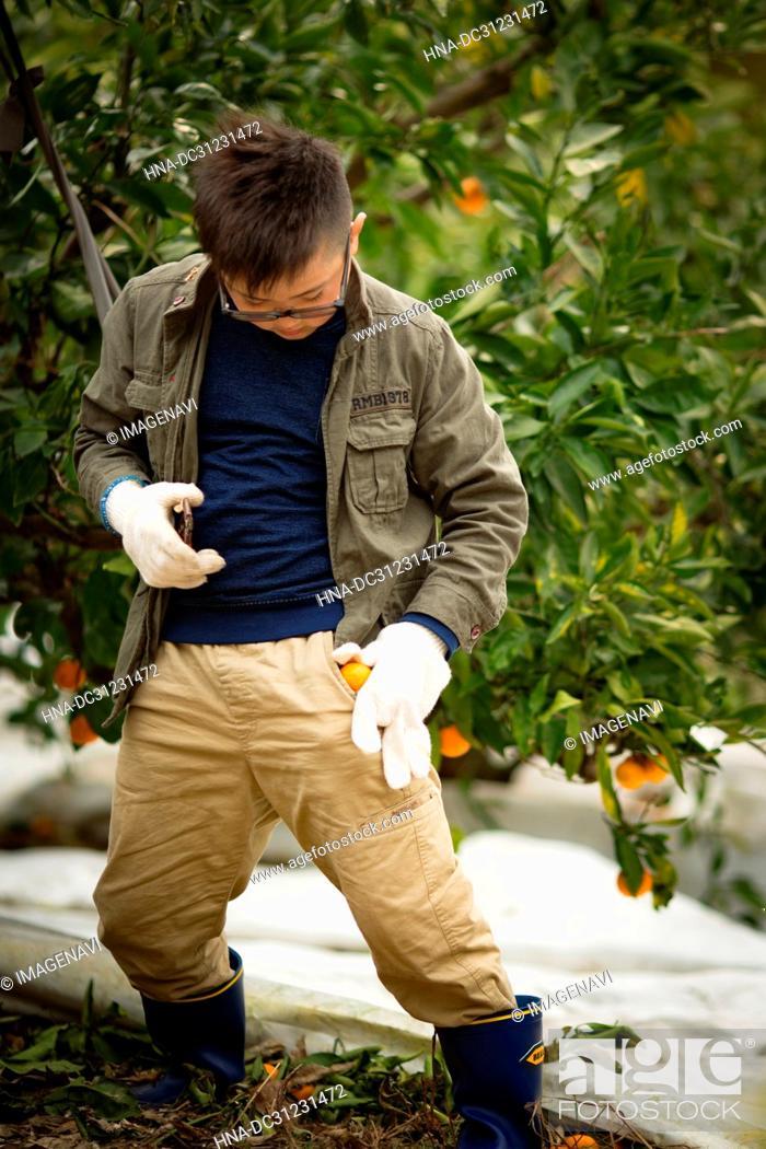 Stock Photo: Tangerine groves and children.