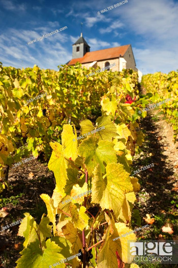 Stock Photo: France, Marne, Champagne Ardenne, Mutigny, town church and vineyards.