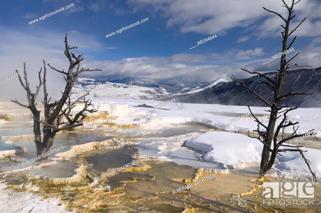 Stock Photo: Dead trees and steaming travertine pools with snow at the Main Terrace at Mammoth Hot Springs Yellowstone Park in winter.