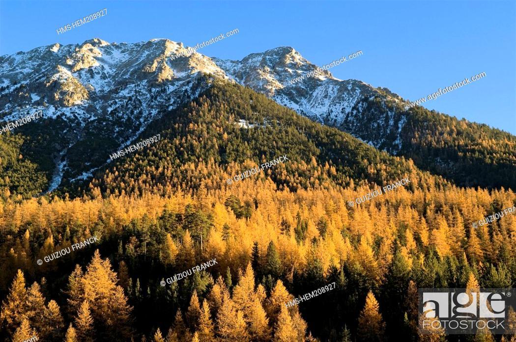 Stock Photo: France, Hautes Alpes, the Brianconnais area in autumn, La Claree Valley, larch trees.