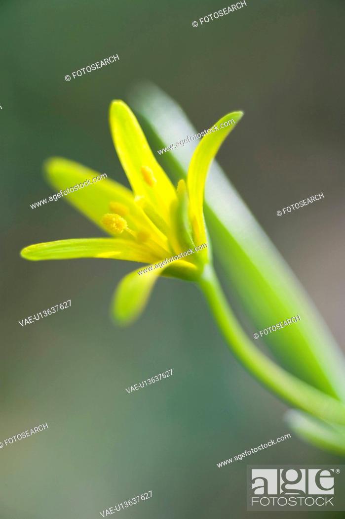 Stock Photo: fruehlingserwachen, alfred, bloom, bloomer, blooming, blooms.