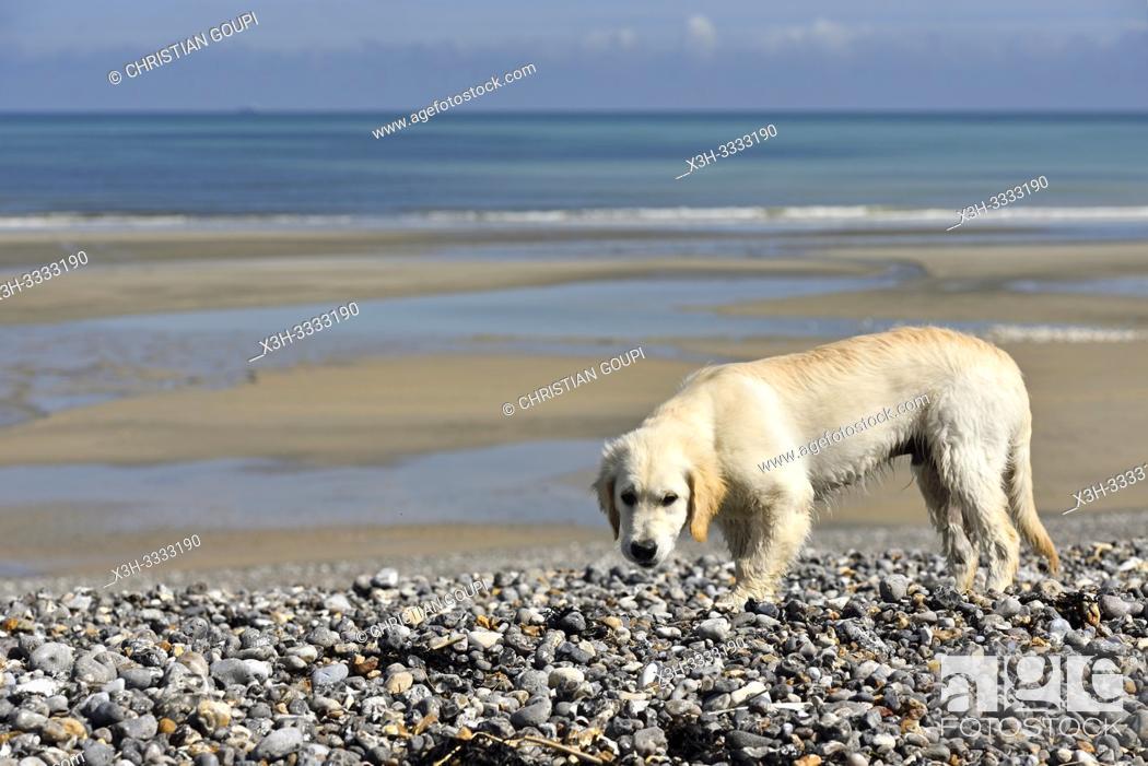 Stock Photo: plage de Quiberville, departement de Seine-Maritime, region Normandie, France/beach of Quiberville, Seine-Maritime department, Normandy region, France.