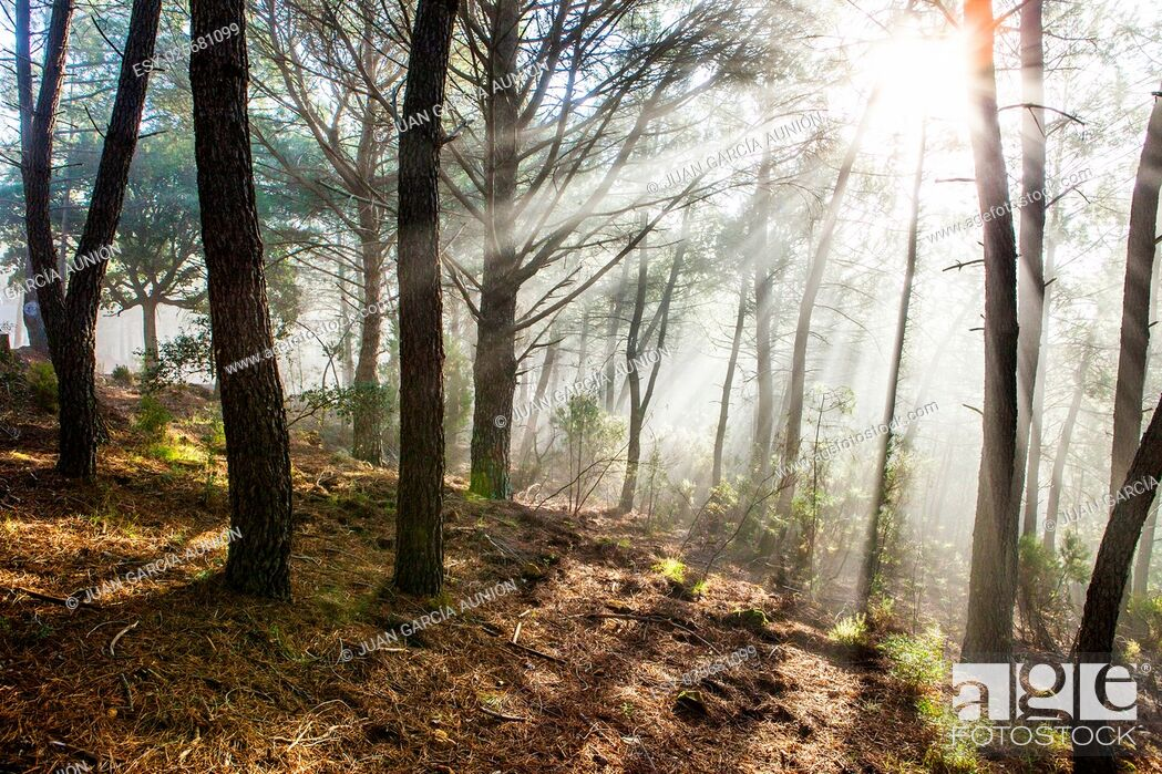 Imagen: Winter forest scenery with rays of warm light at sunrise, Riomalo de Abajo, Hurdes, Caceres, Spain.