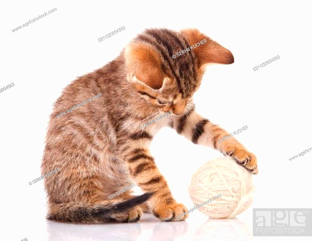 Stock Photo: playful kitten with white ball.