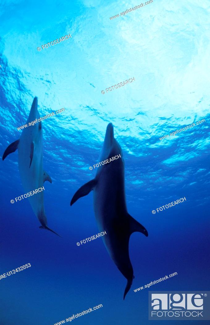 Stock Photo: Dolphin.