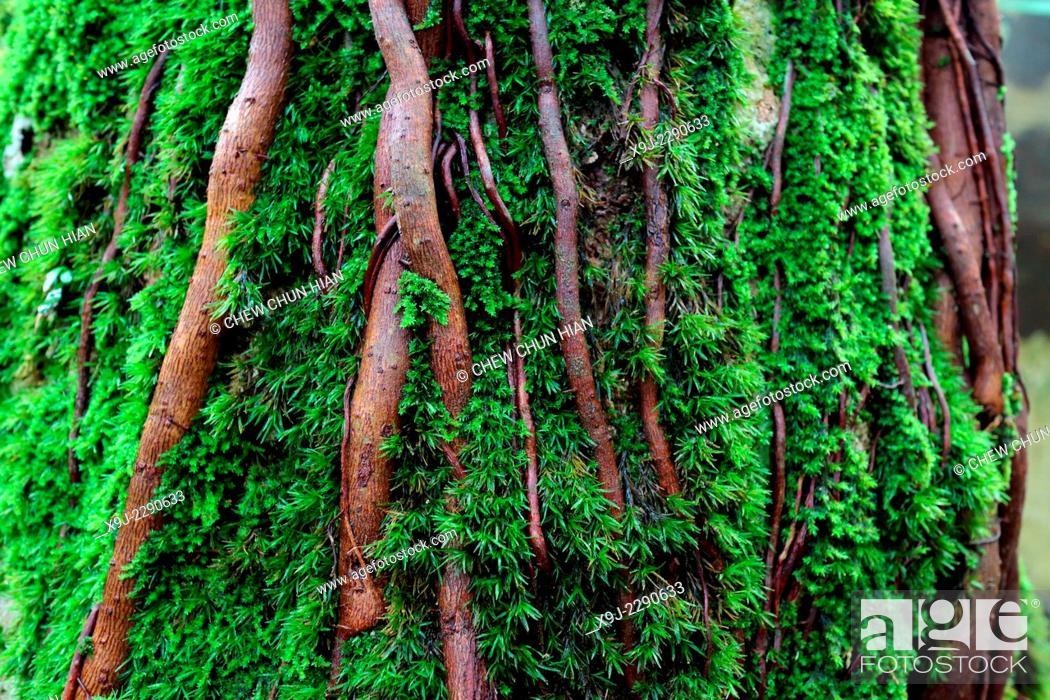 Photo de stock: plant in nature, borneo.